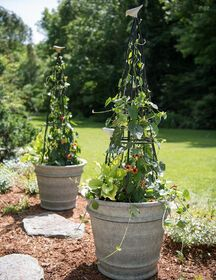 Enchanted Woods Metal Planter Obelisk | Gardeners.com #selfwatering