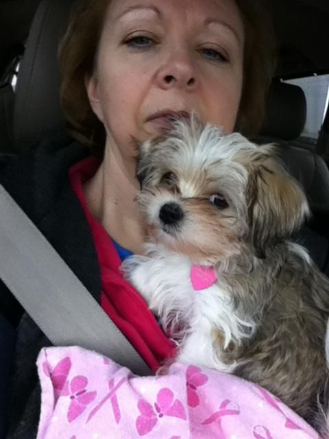 Annabelle With Her New Mommy This Parti Color Morkie Girl Beautiful Baby From Chiaspet Parti Color Morkies In Dall Puppy Photos Fur Babies Beautiful Babies