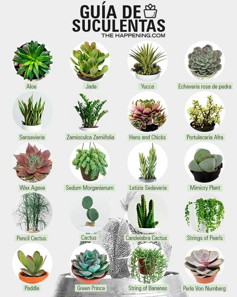 Suculentas cactus y suculentas suculentas plantas - Tipos de plantas de exterior ...