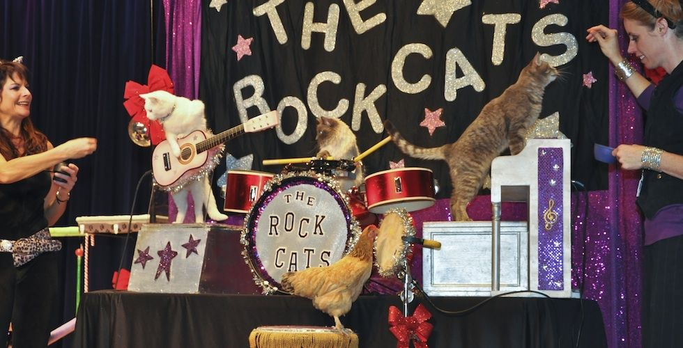 Cat Circus At Fort Mason Although This Is A Limited Time Only Performance Now Through June 1 We Couldn T Pass Up The Oppo Cat Entertainment Cats Cats Knead