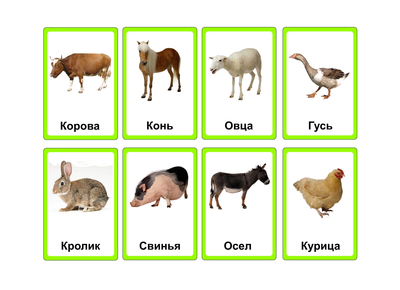 рис картинки животные для карточек самым эффективным