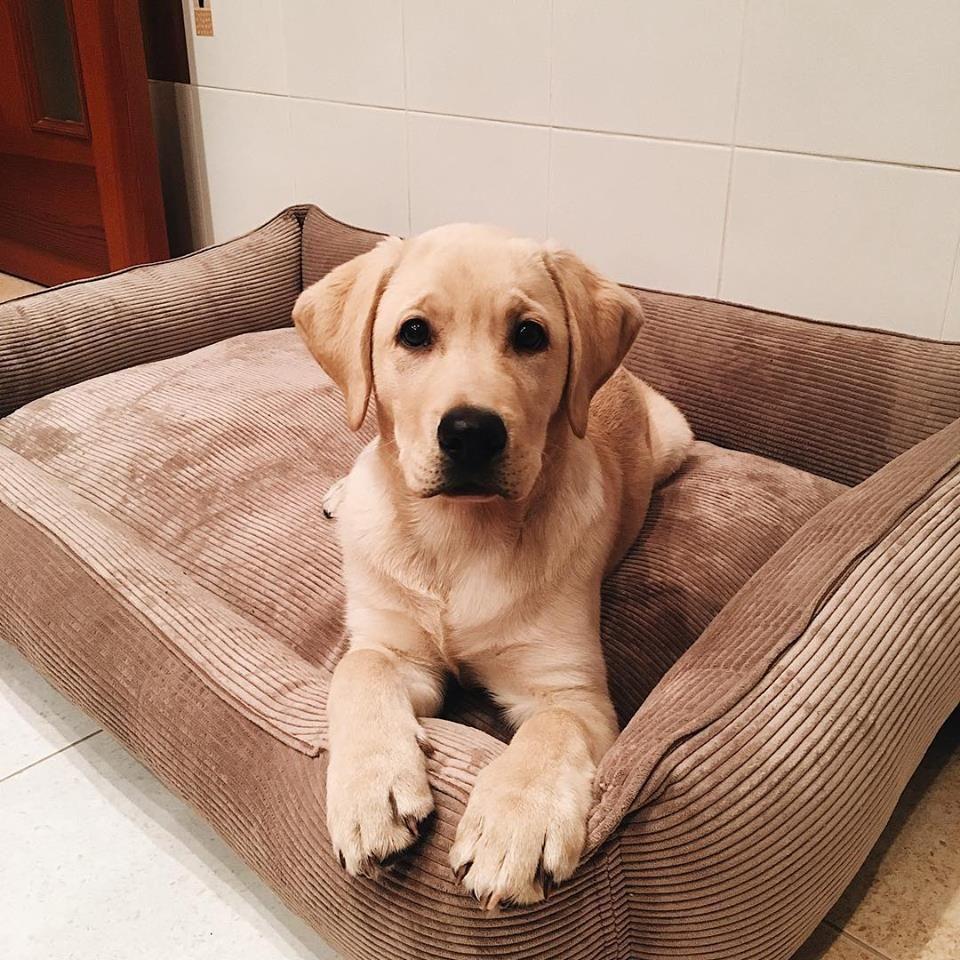 Pet Floor Cushion Dreamer Pet Nest Cacao Velvet Mat For Dog
