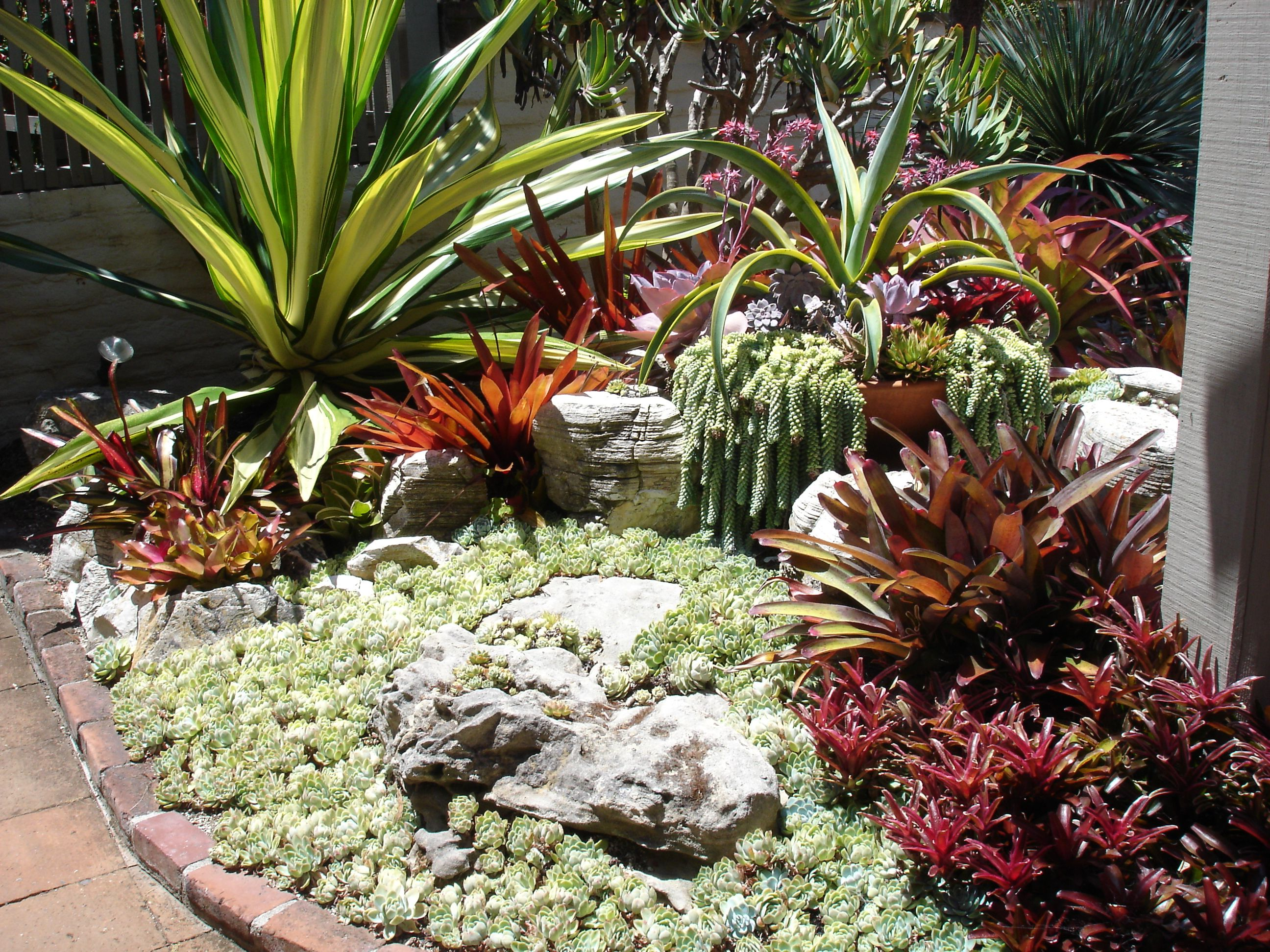 Cactus succulent garden design at sherman gardens for Garden design with succulents