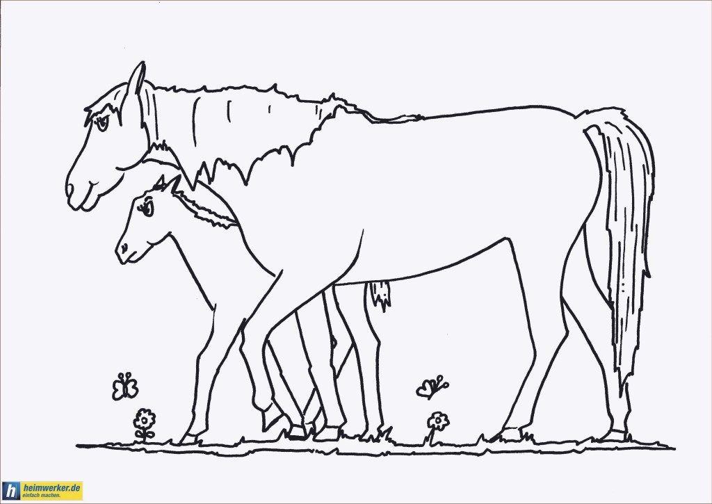 Malvorlagen Pferd Mit Fohlen