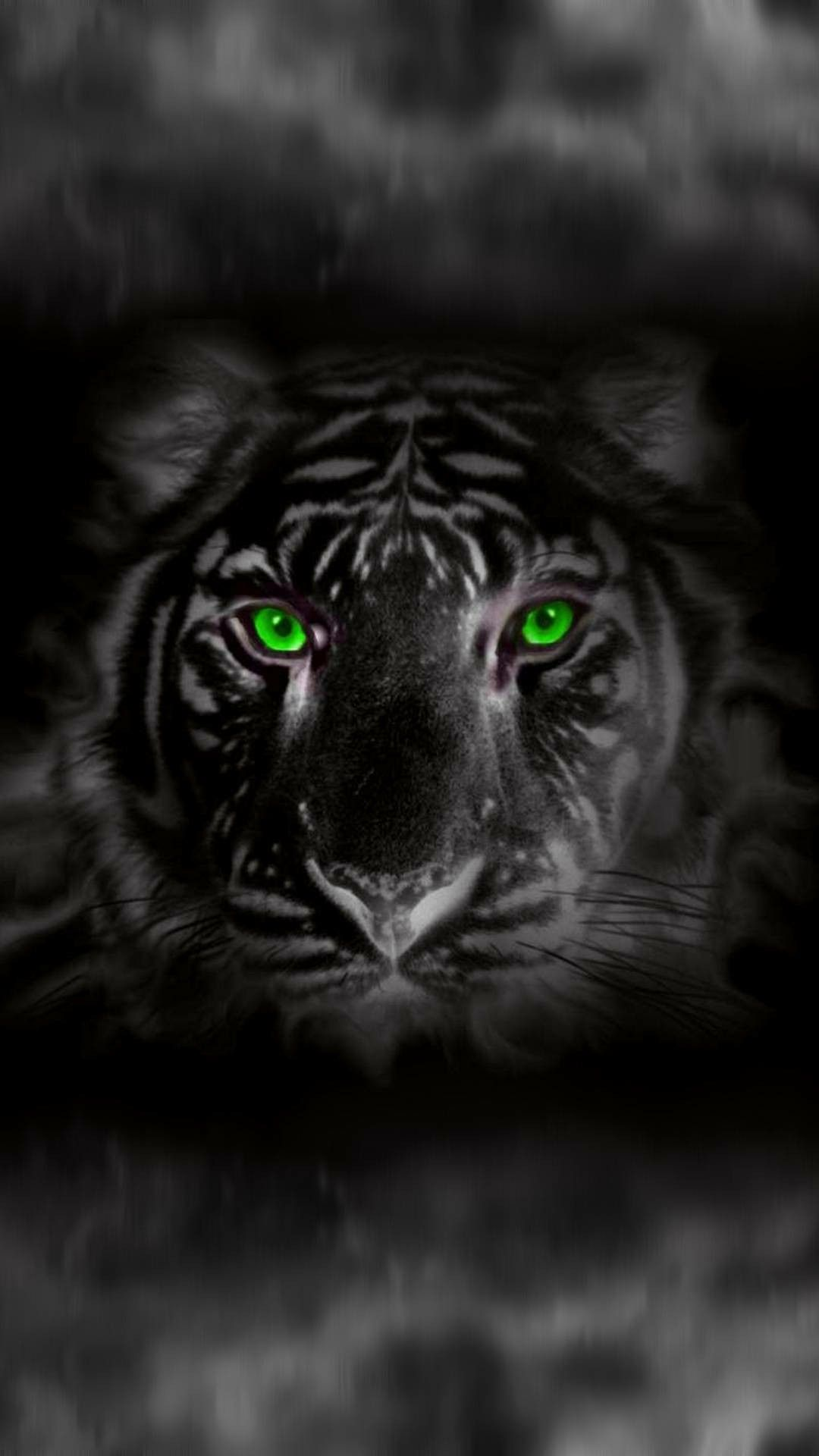 White Tiger With Green Eyes Green Tiger Eye Black Tigers