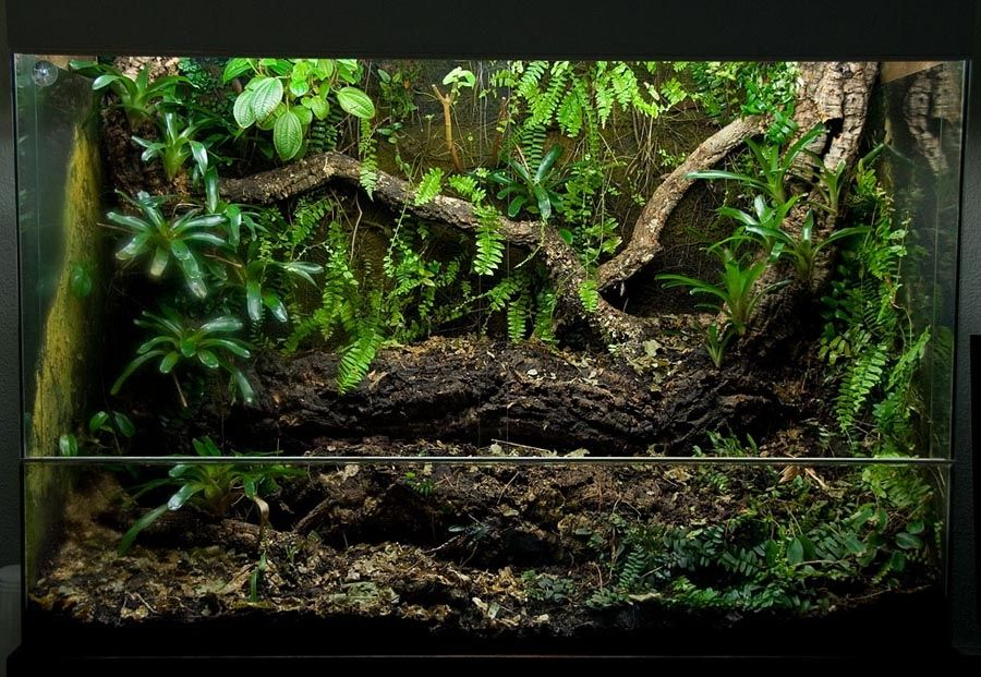 Rainforest Vivarium Beautiful But Could Use Some Vines