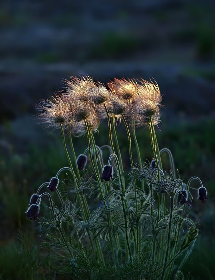 Pin By J G On Come Dance With Me With Images Nature Flowers
