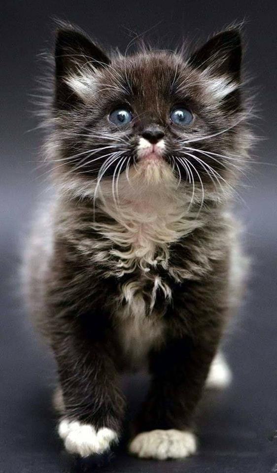 LitterSolutionsCat Looking for a New Cat Litter Plan