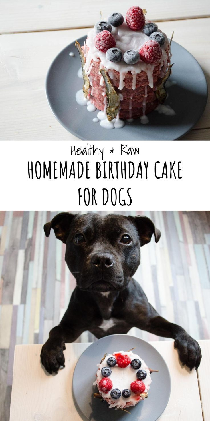 Raw Birthday Cake For Your Dog Recipe Birthday Cakes Dog And