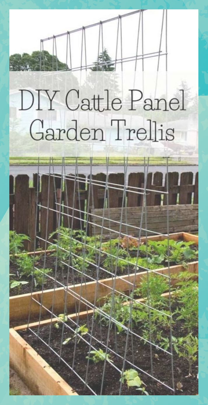 Diy Cattle Panel Garden Trellis Garden Trellis Backyard