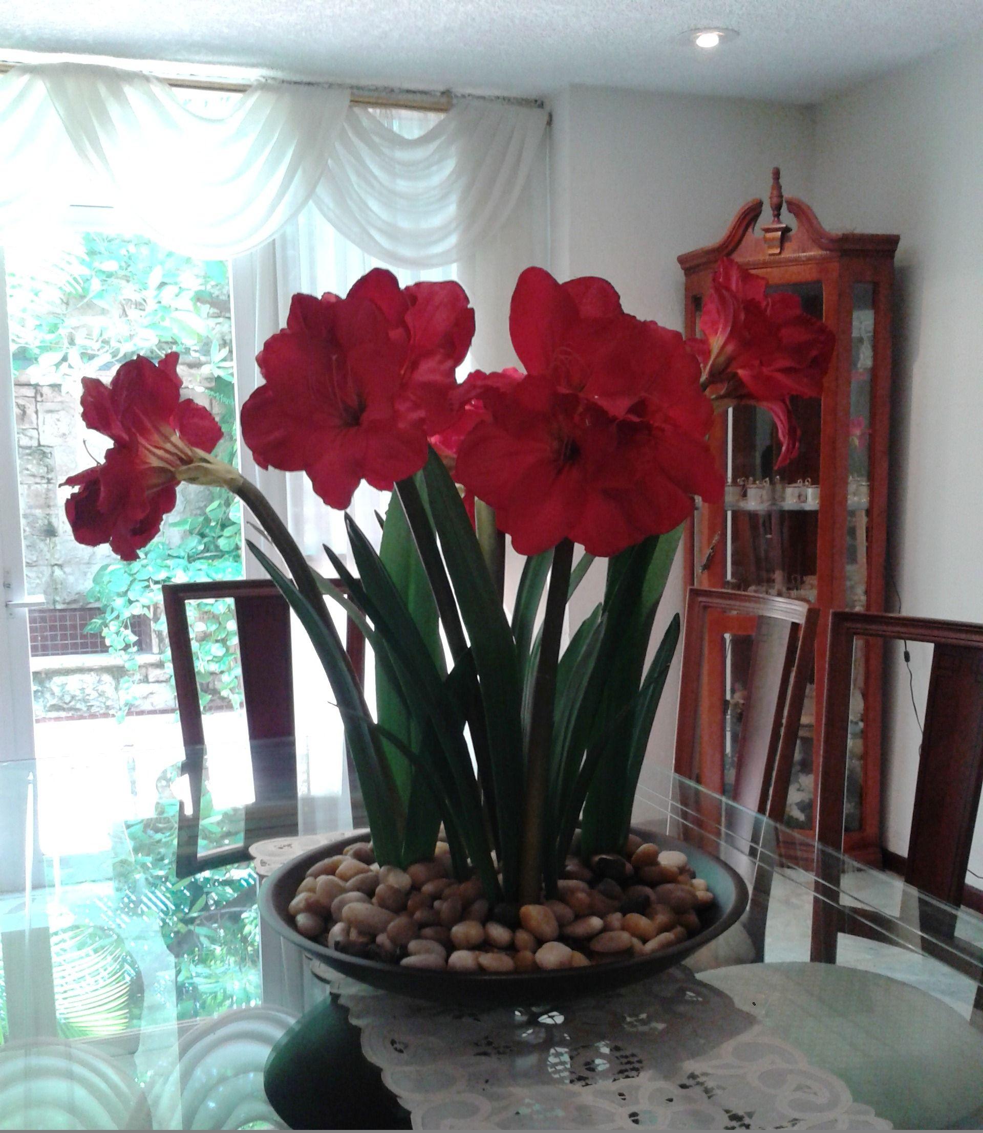 Centro de mesa de amarils rojas for Amarilis decoration