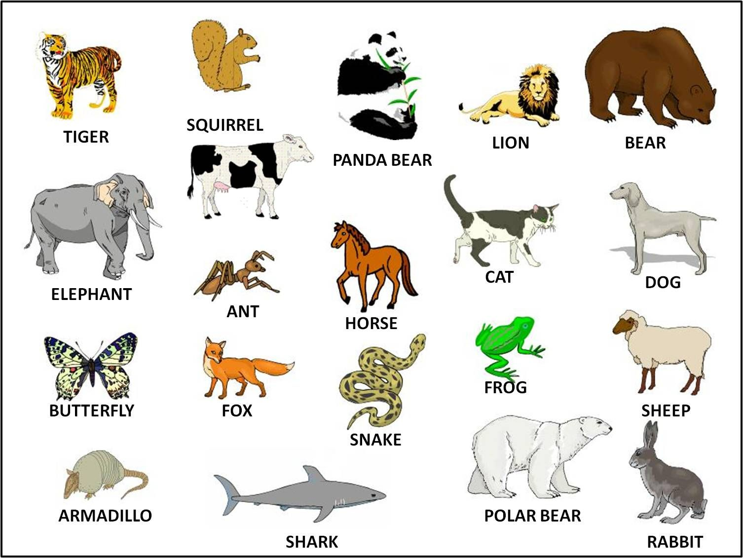 Animals//Vocab | Ideas for the House | Wild animals pictures