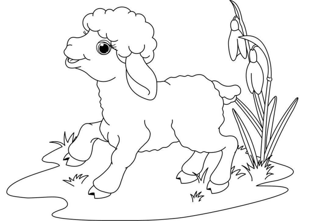 Dibujos animados de ovejas para colorear | En casa