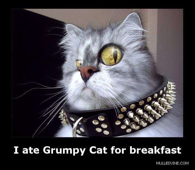 funny grumpy cat photo Grumpy cat humor, Funny cats
