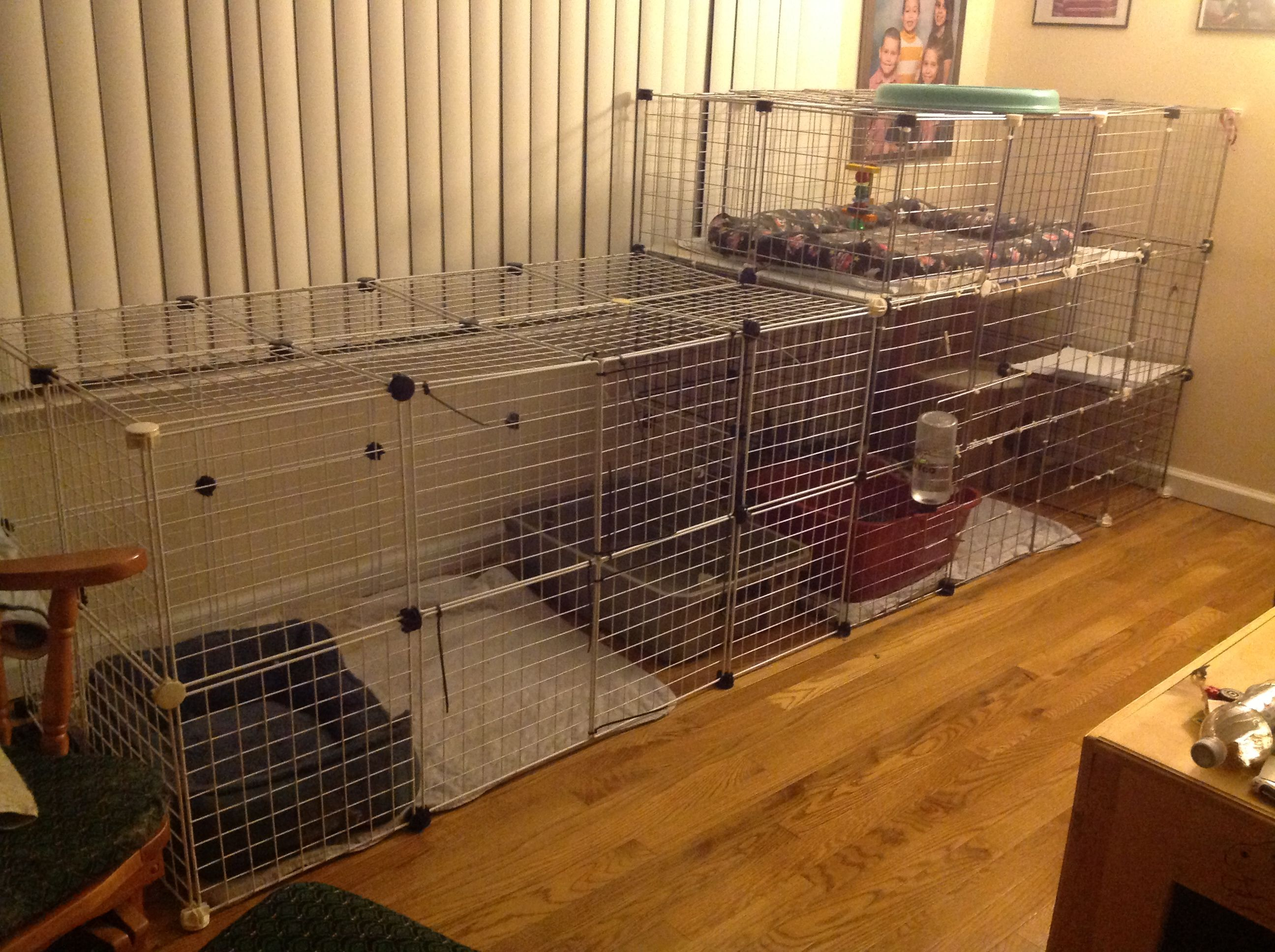 Double Flemish giant rabbit cages!!!!   Rabbit cage ... - photo#1