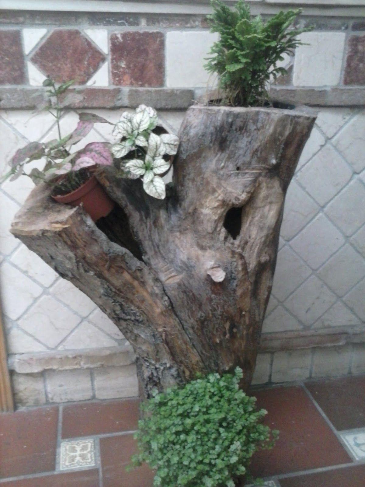 Que plantas poner en el interior de mi casa plantas y for Como decorar un arbol de jardin