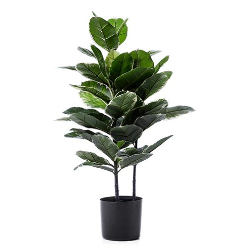 Genial Home Republic   Rubber Fig Potted Plant   Homewares   Pots U0026 Plants    Adairs Online