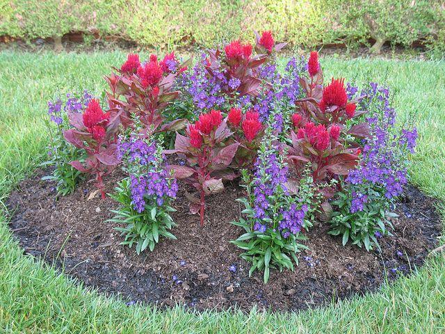 Pincushion Garden Garden How Plants Grow