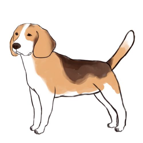 How To Draw A Beagle Drawings Animal Drawings Beagle