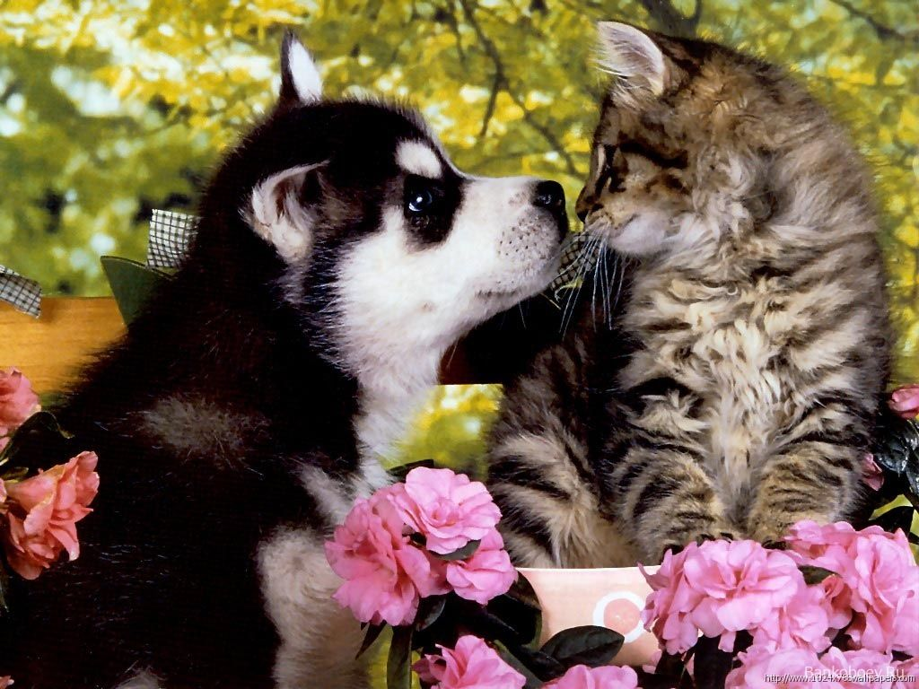 Friends Cute Puppies And Kittens Cute Cats And Dogs Cute Baby Animals