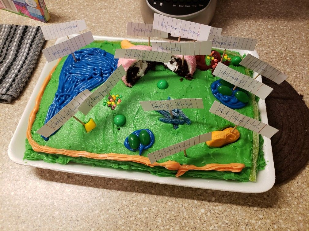 Plant cell school project that I personally made. Edible ...