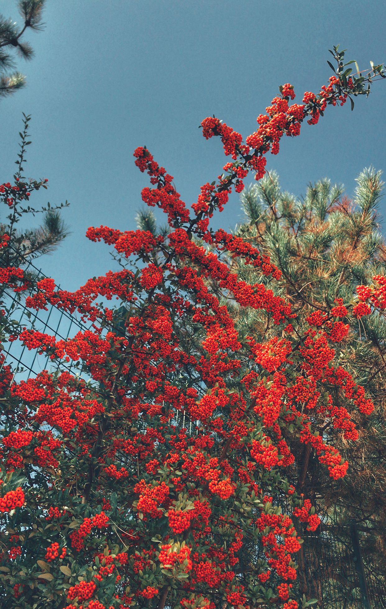 Aesthetic Wallpaper Iphone Flowers