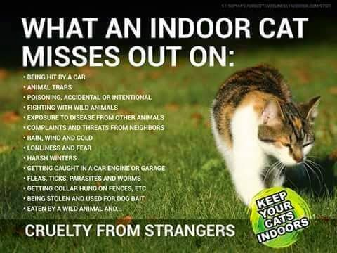 What An Indoor Cat Misses Out On Indoor Cat Cat Care Cats