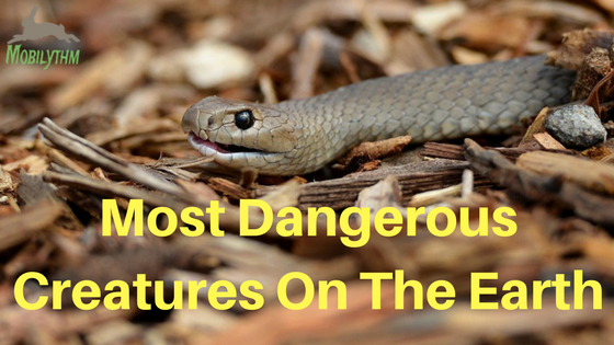 Most Dangerous creatures on Earth Australia animals