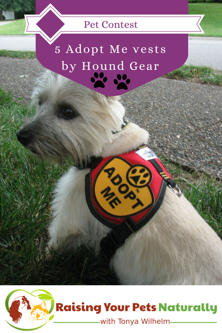 Pet Contest Register To Win Adopt Me Vests By Hound Gear Pet Hacks Dog Contest Dog Giveaways