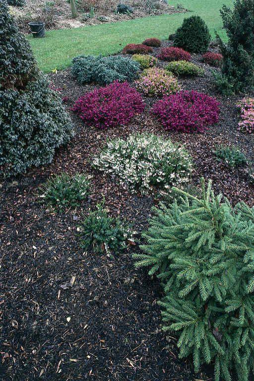 Bark garden (with flax) for driveway entranceway | Garden ...
