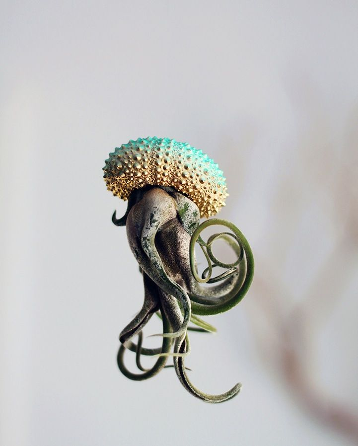 Delightful Pots Turn Air Plants Into Whimsical Jellyfish - Luftpflanzen Pflege
