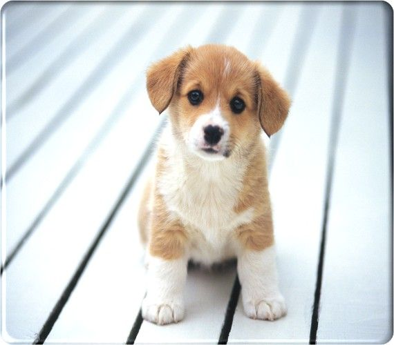 Animal Wallpapers Free Wallpapers Animals Pet Cute Puppies