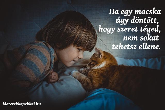 cicás idézetek képekkel Macskás idézetek   Idézetek Képekkel | Kittens cutest, Cat safety
