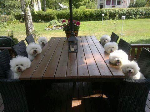 #Doggies at the table #where is lunch?