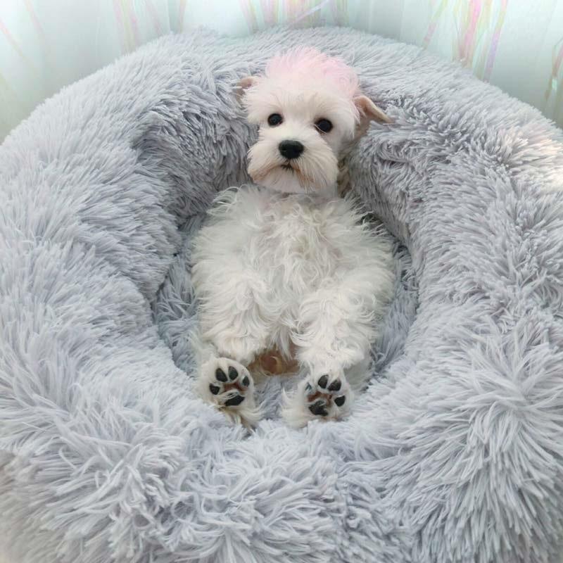 Tier™ Acogedora cama para perro GrabYourGift ES