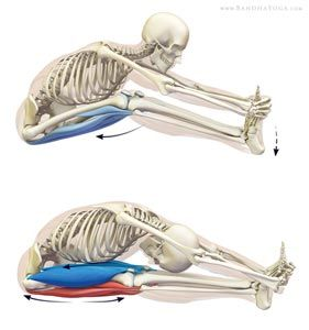 the physiology of stretching tricks to lengthen muscles
