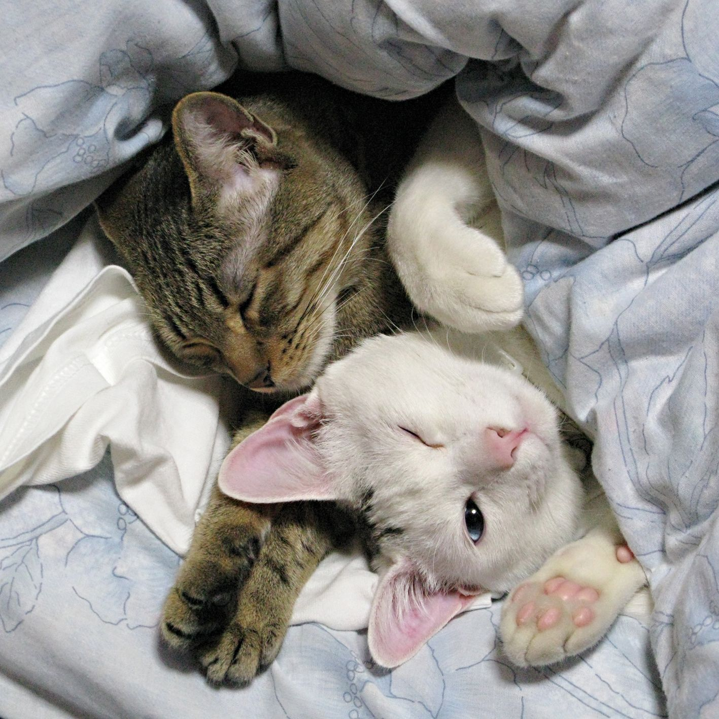 A Life Of Love Cute Cats Kittens Cutest Silly Cats