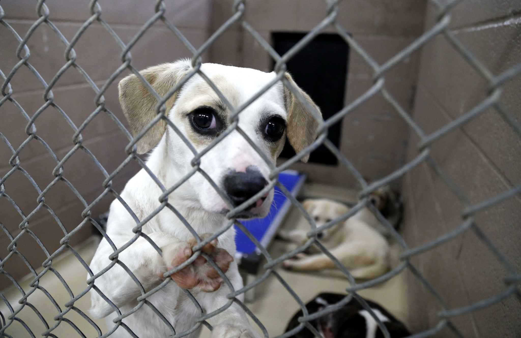 Harris County Animal Shelter In Capacity Crisis Drops Fees To 10 Animal Shelter Cat Illnesses Animals