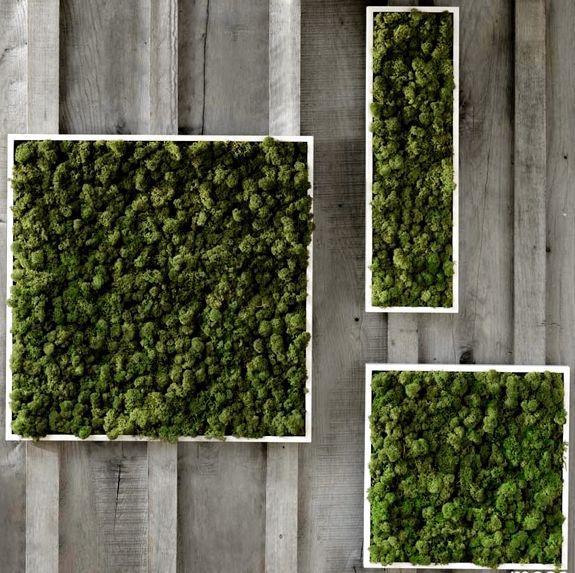 unusual home decor: fern and moss wall art | moss | pinterest