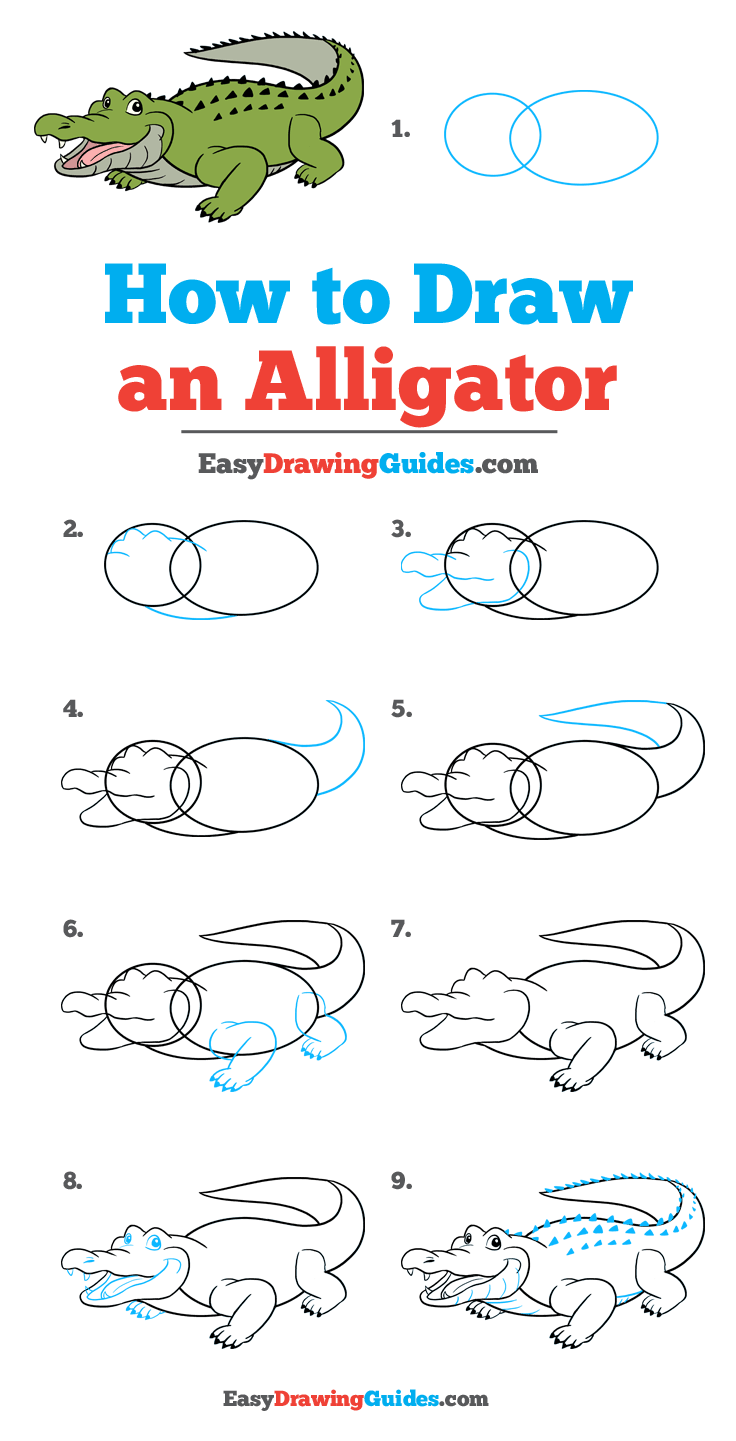 How To Draw An Alligator Really Easy Drawing Tutorial Drawing Tutorial Easy Easy Drawings Drawing Tutorial