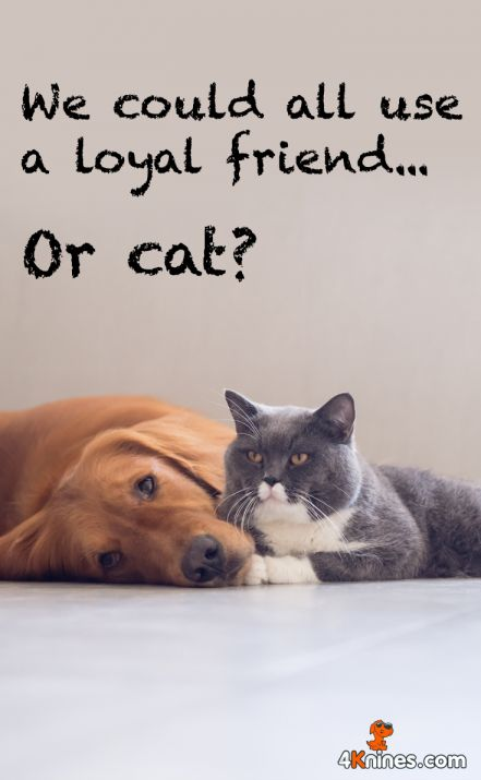 Photo of 16+ Dog And Cat Friendship Quotes – Friendship Quote – Quoteslife99.com