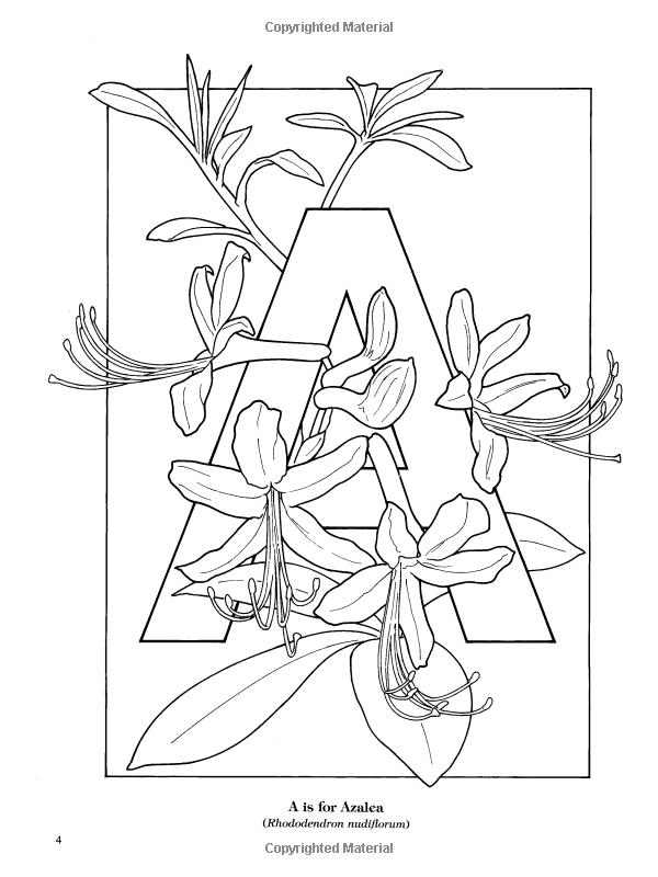 Garden Flowers Alphabet Coloring Book Ruth Soffer Coloring Books For Adults 9780486435954 Boo Coloring Books Mandala Coloring Books Butterfly Coloring Page