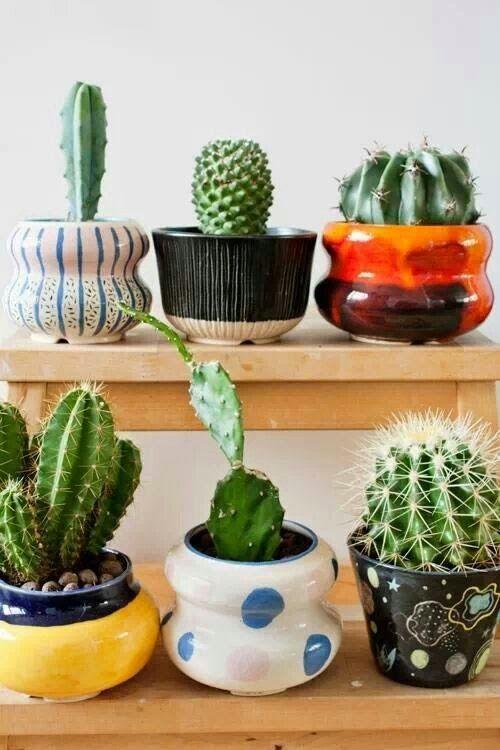 Cute Little Pots Gardening Group Board Plants Cactus Cactus