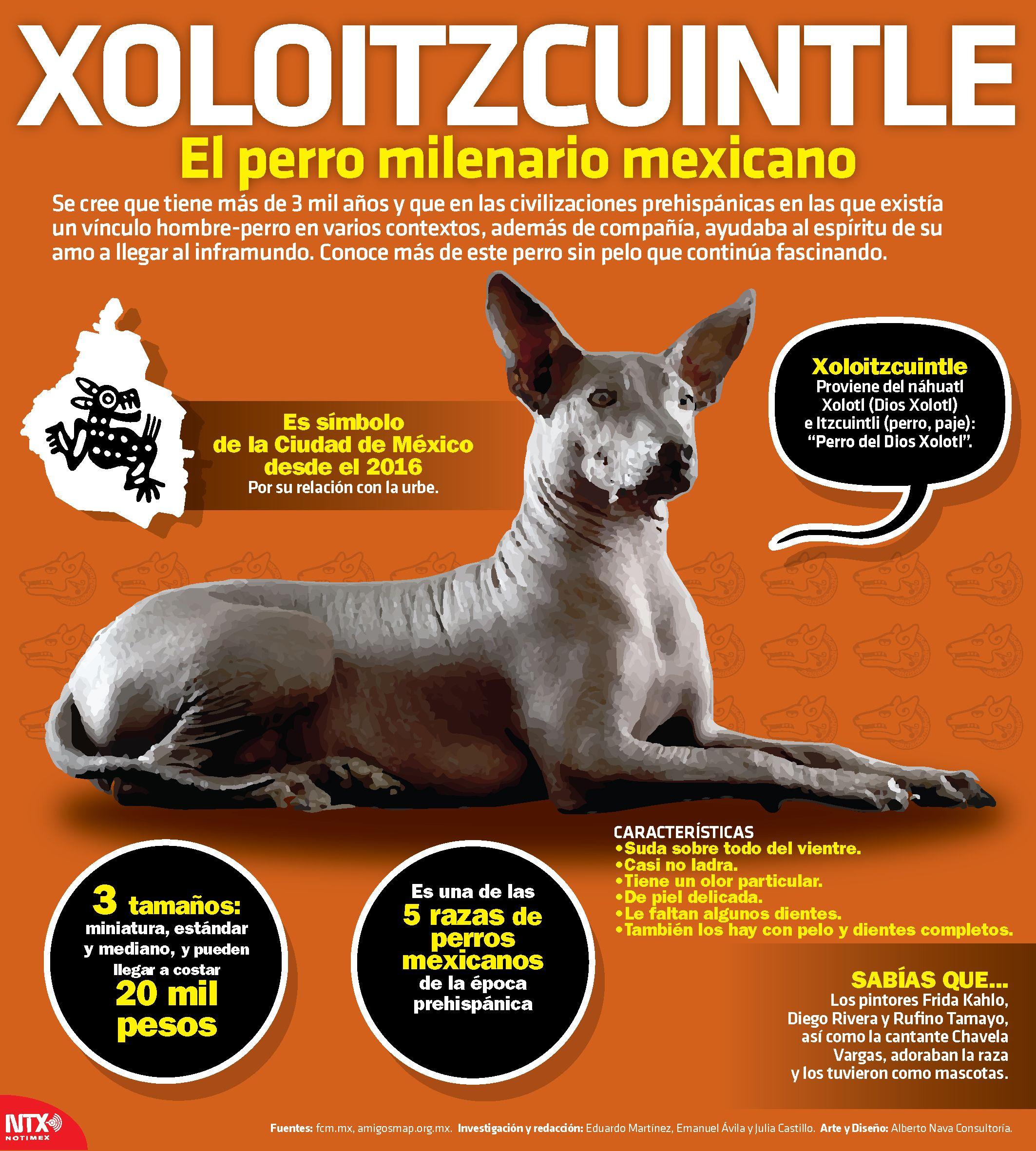 Sab asque la palabra xoloitzcuintle proviene de n huatl for De que lengua proviene la palabra jardin