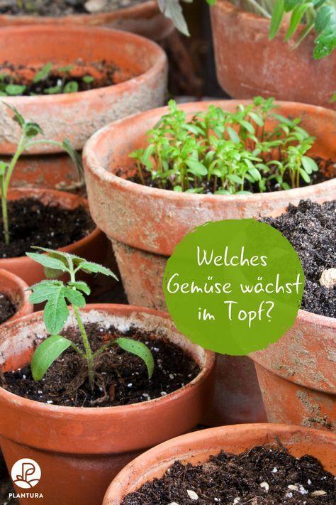 Gemüse im Topf anbauen: Die 10 besten Sorten für die Topfkultur - Plantura #vertikalergemüsegarten