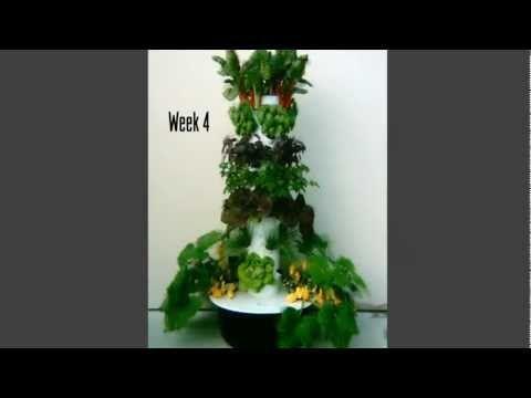 Tower Garden 4 Week Time Lapse Video