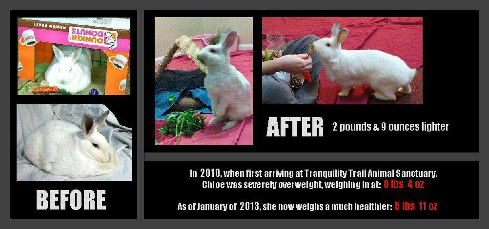 Weight loss aid amazon image 1