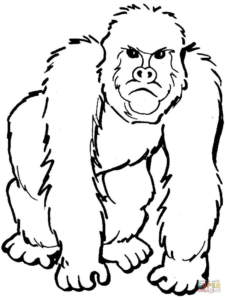 Silverback Gorilla Coloring Pages The Gorilla Is The Second Species After The Chimpanzee Is Clo Zoo Coloring Pages Animal Coloring Pages Garden Coloring Pages
