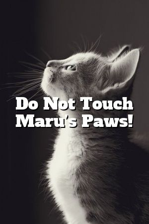 Maria Black Tells About Do Not Touch Maru's Paws!   #cats  #kittens  #cute  #love  #lovecats  #Kittens  #Cat  #Patterns