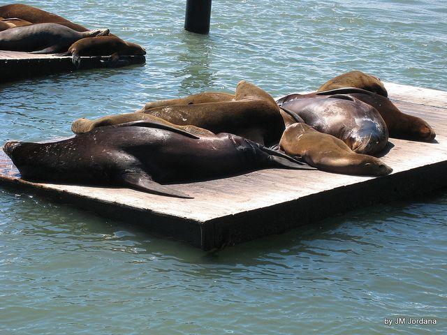 Pier 39 Seals (San Francisco,USA)